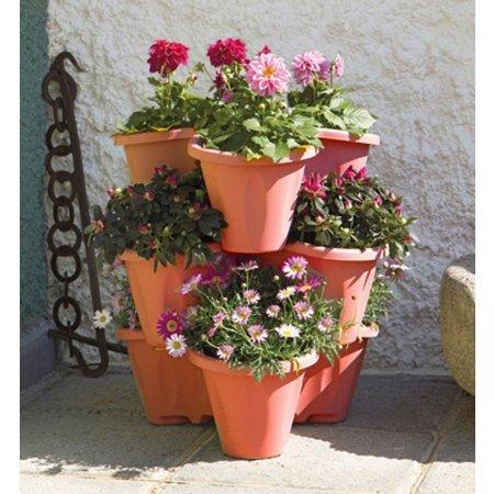 Piante da esterno in offerta confronta prezzi giardinaggio for Pianta da esterno